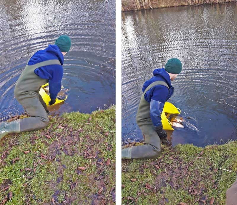 Photos of the new carp being released into Elton Carp lakes