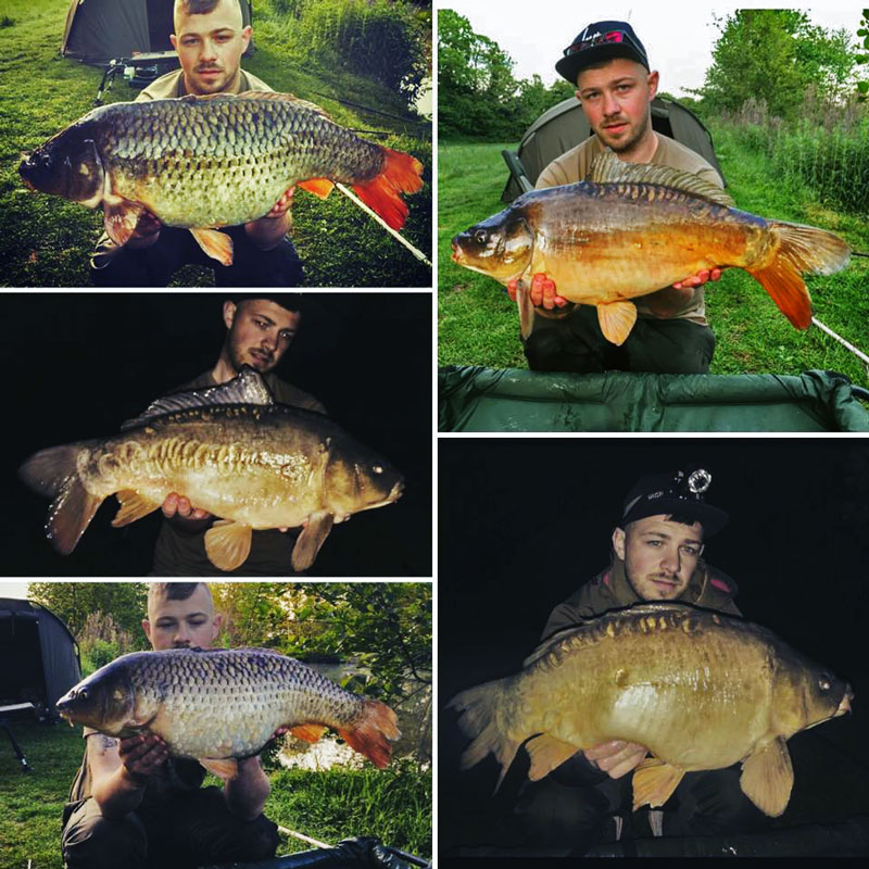 A photo of Dale with a selection of carp.