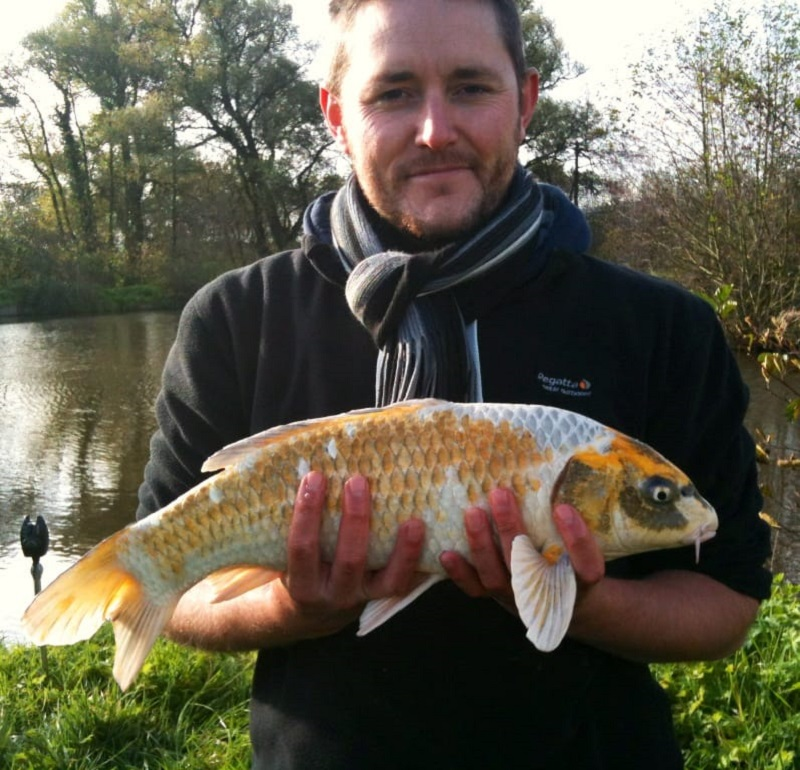 Photo of Multi coloured Ghost Carp
